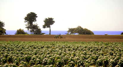 field: locally grown produce, Pajaro Valley fields, fresh, organic, Watsonville, Santa Cruz County